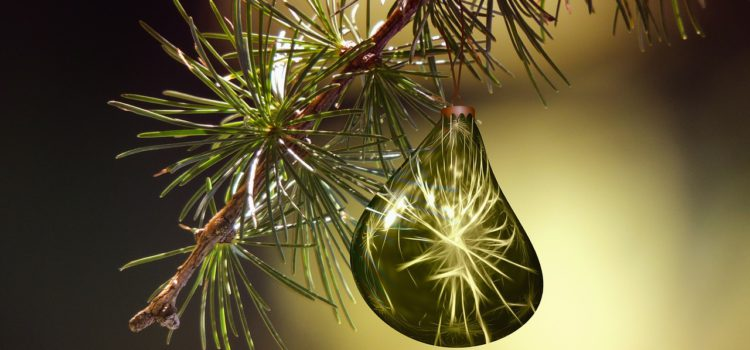 Oh, Tannenbaum… wie gesund sind deine Blätter!